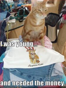 Funny-pictures-cat-was-a-child-model-1